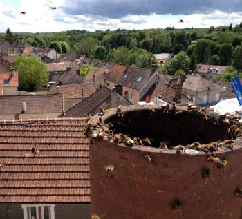 Nid de guepe dans le toit simple destruction de nid de for Nid d oiseau sous toiture
